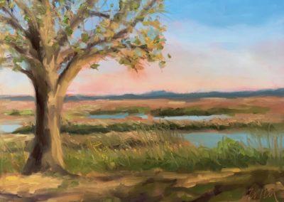 landscape-0020
